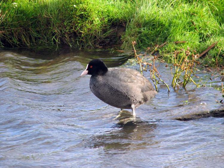 Wetlands-puglia