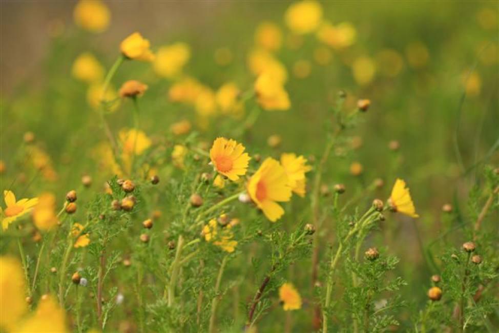 flora-zone-umide-pugliesi
