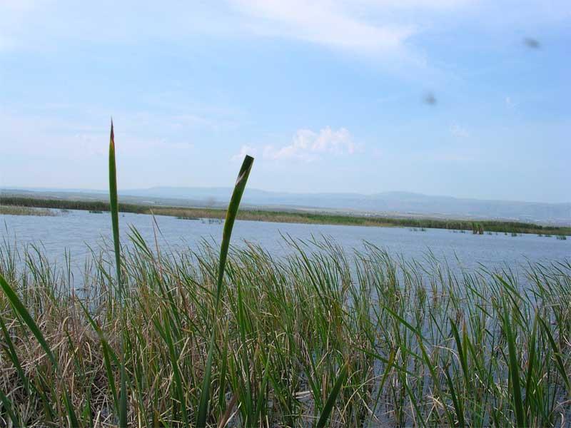 lago-salso